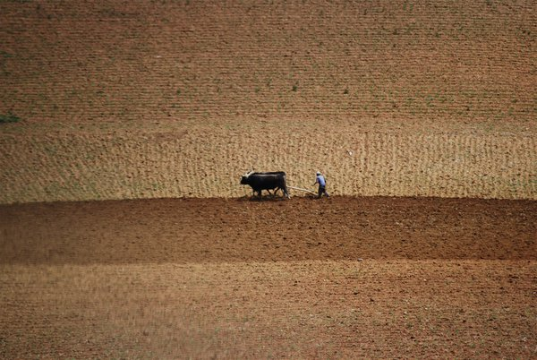 Food, labour, human rights and environmental health are inherently linked. Illustration: ploughing fields, Concepcion Province, Peru 2007.