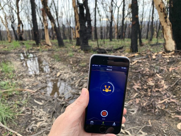 New growth emerges from a landscape scarred by bushfires in summer 2020, using FrogID to record frogs in the area.