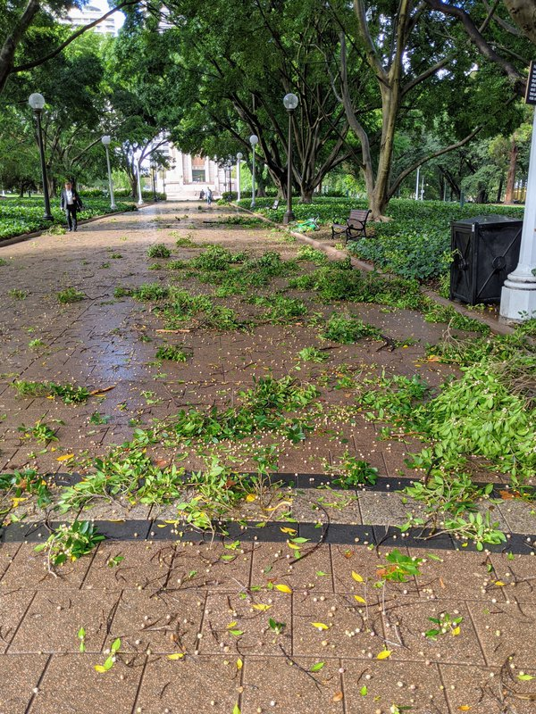 The morning after. The typically well-maintained Hyde Park was looking slightly battered after a massive overnight storm.