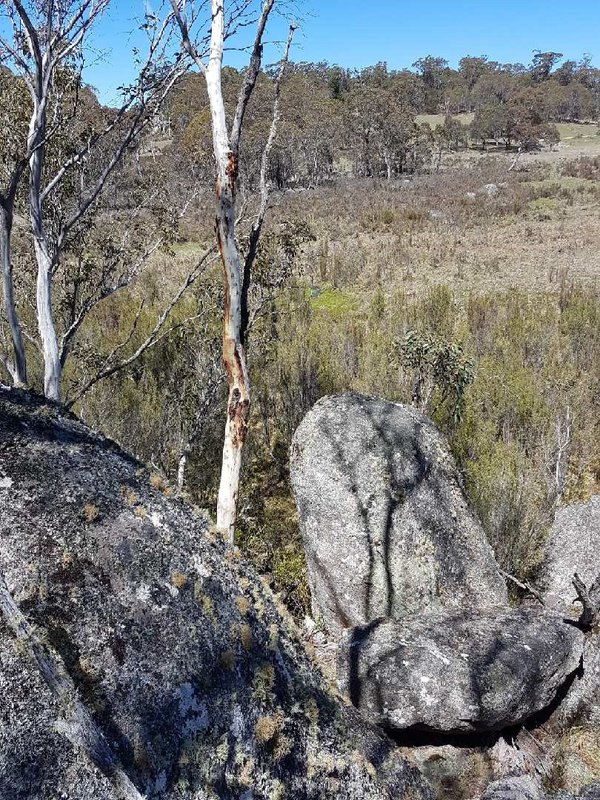 Endangered remnant strands of Sphagnum Bogs along the Numeralla River, south-eastern NSW.