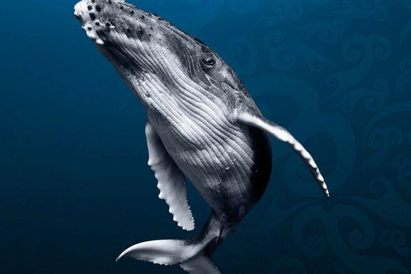 Whales CTA Promo Image