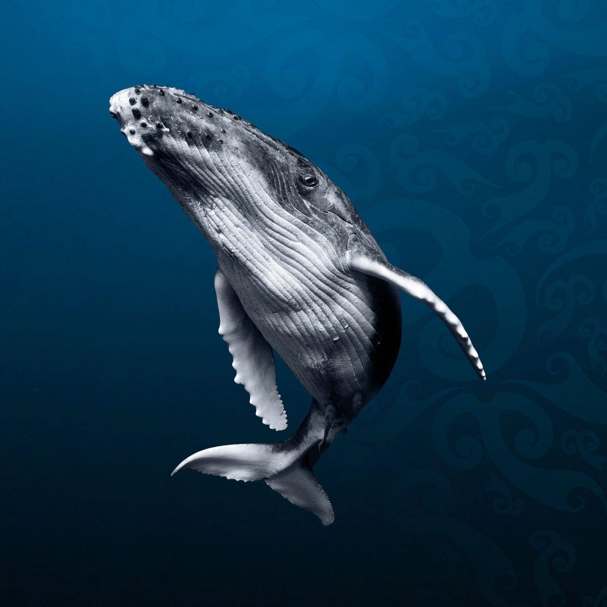 Whales Tohor