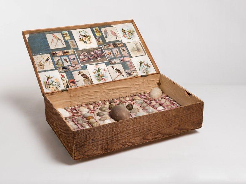 Birds' eggs in hobby display