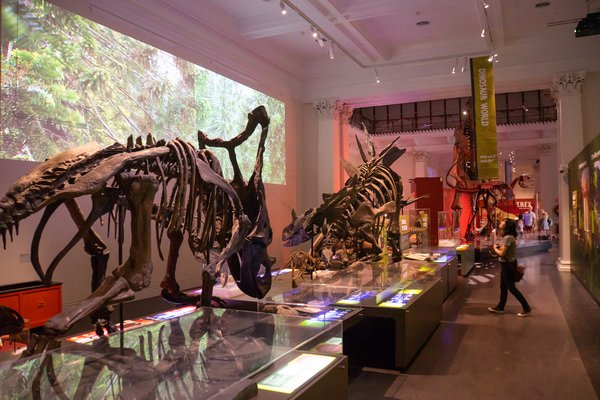 Dinosaur Gallery after the refurbishment