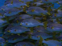 School of reef fish