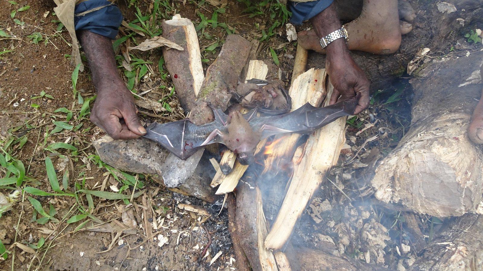 Fruit bats (42)