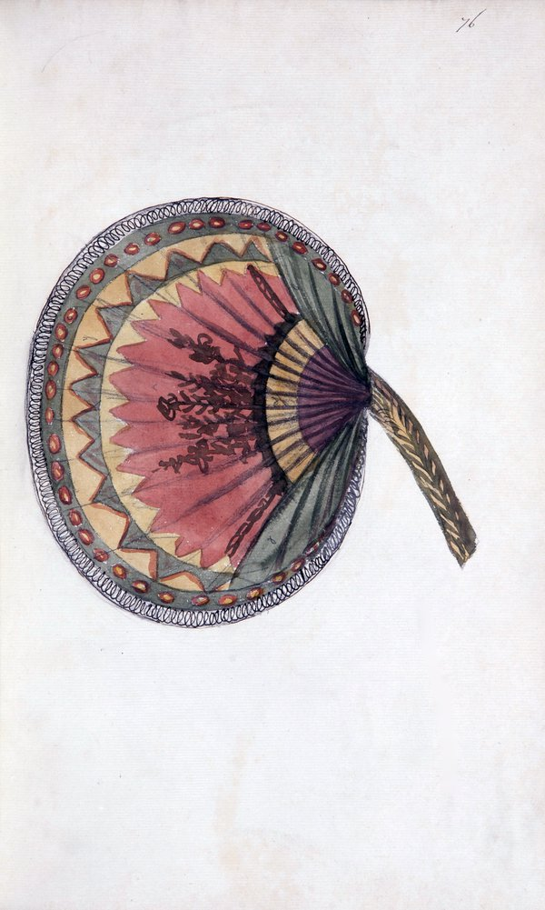 """""""A collection of drawings by Sarah Stone of the principal object"""