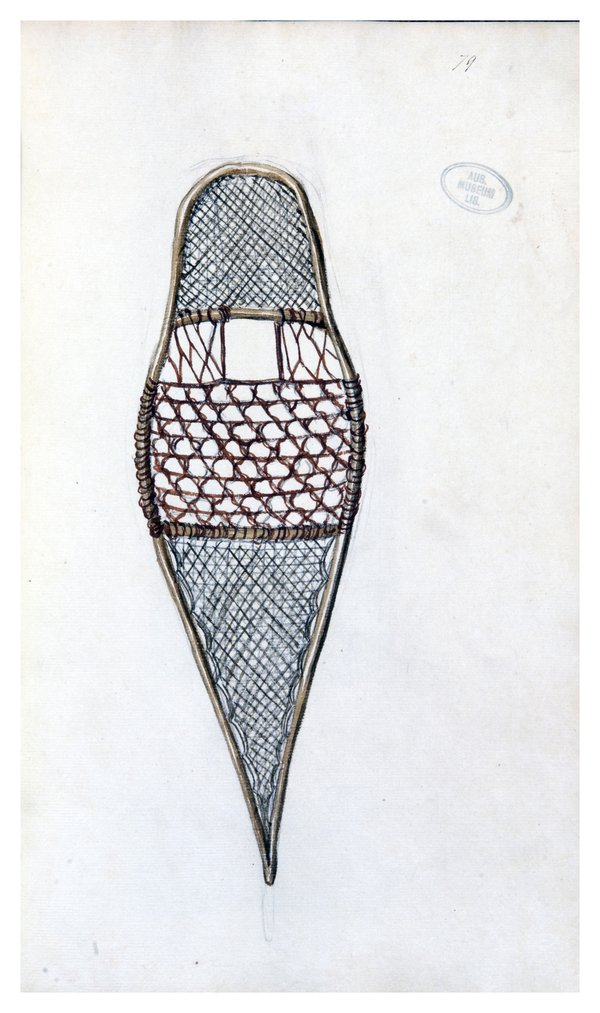"""A collection of drawings by Sarah Stone of the principal object"