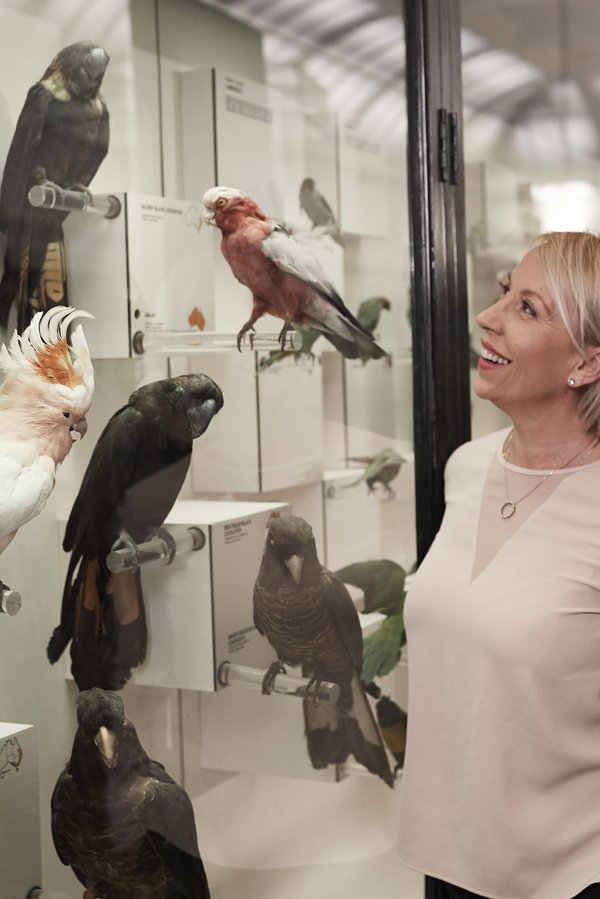 Woman looking at a bird display