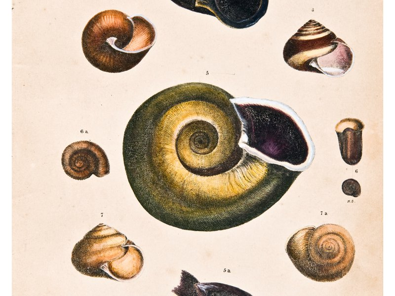 Land shells by Harriet Scott, Plate 1