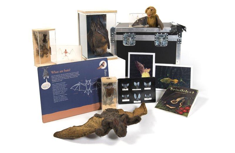 Bats Museum in a Box