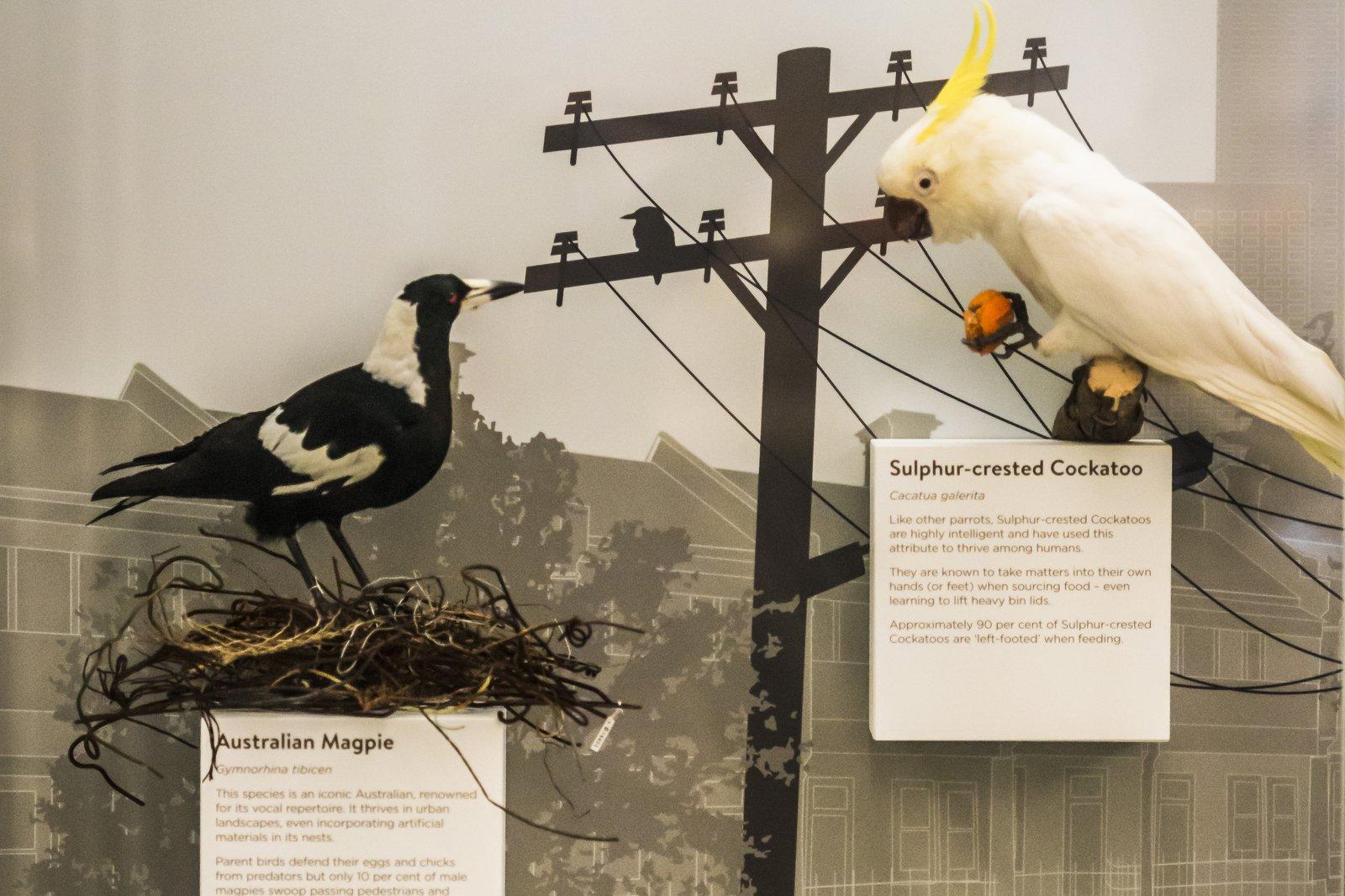 Birds of Australia Gallery 2018