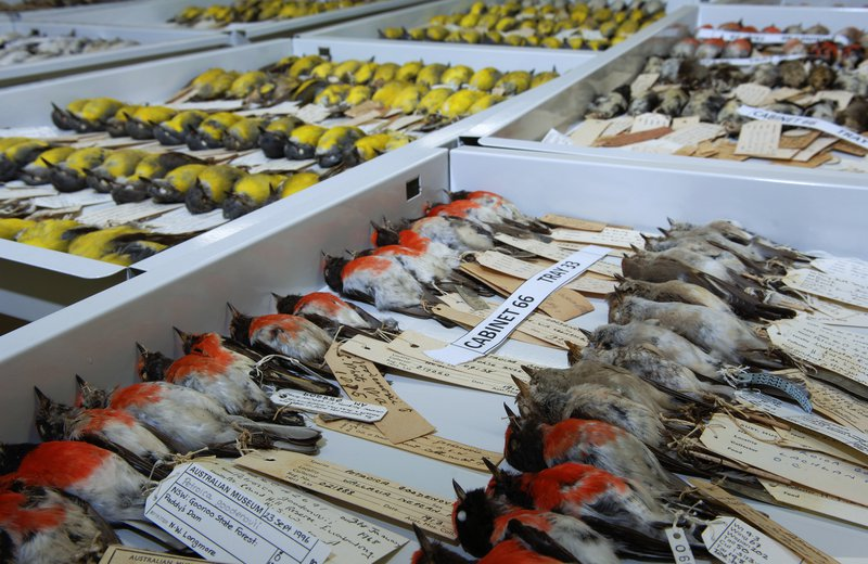 Ornithology Collections 2008