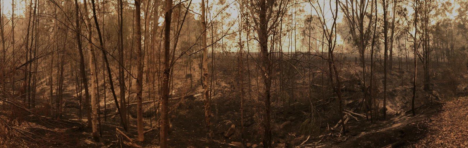 Bushfires Banner