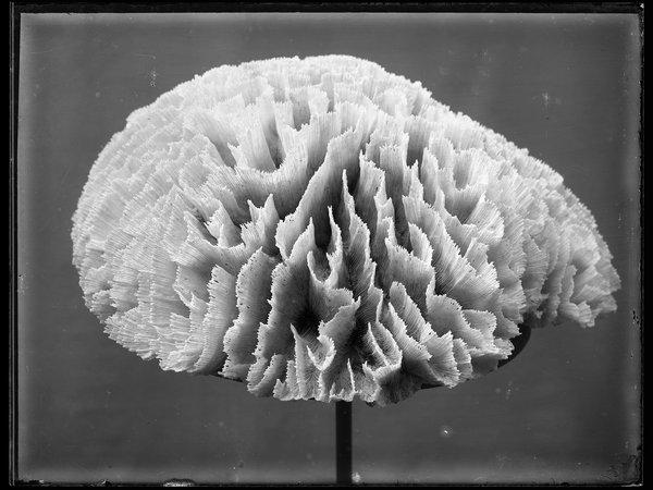 Capturing Nature - Australian Museum Archival Photography