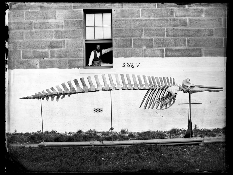 Capturing Nature Australian Museum Archival Photographs