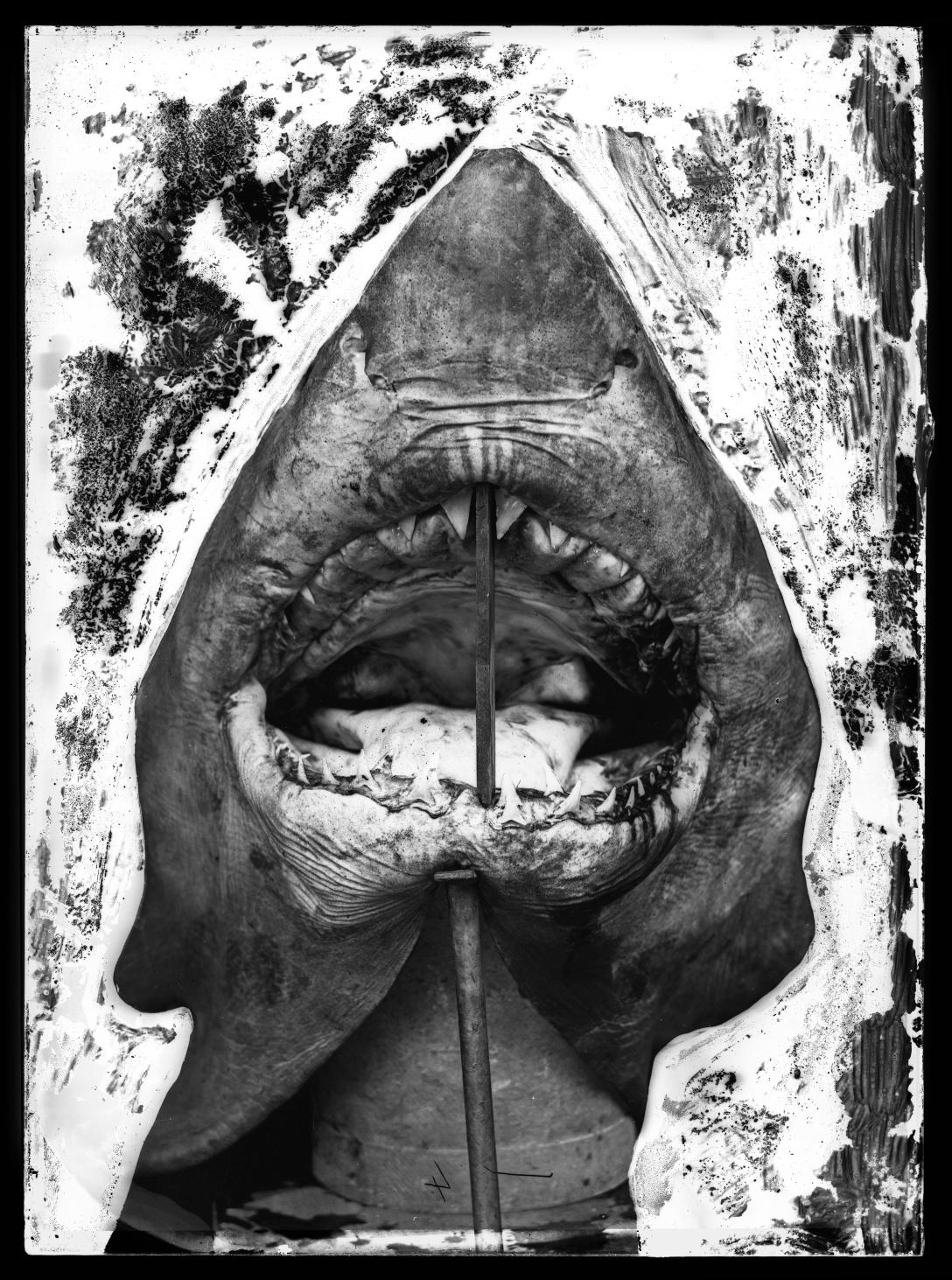 Capturing Nature Australian Museum Archival Photographs