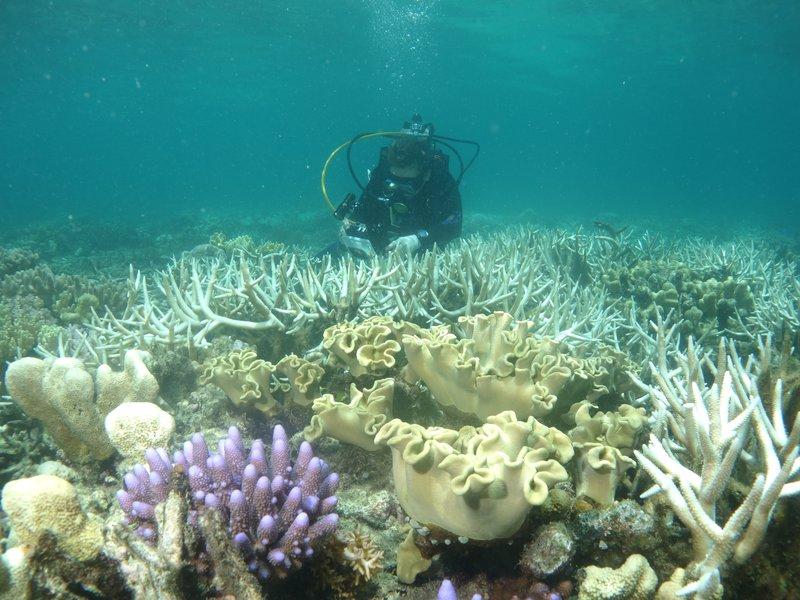 Coral Bleaching at Lizard Island