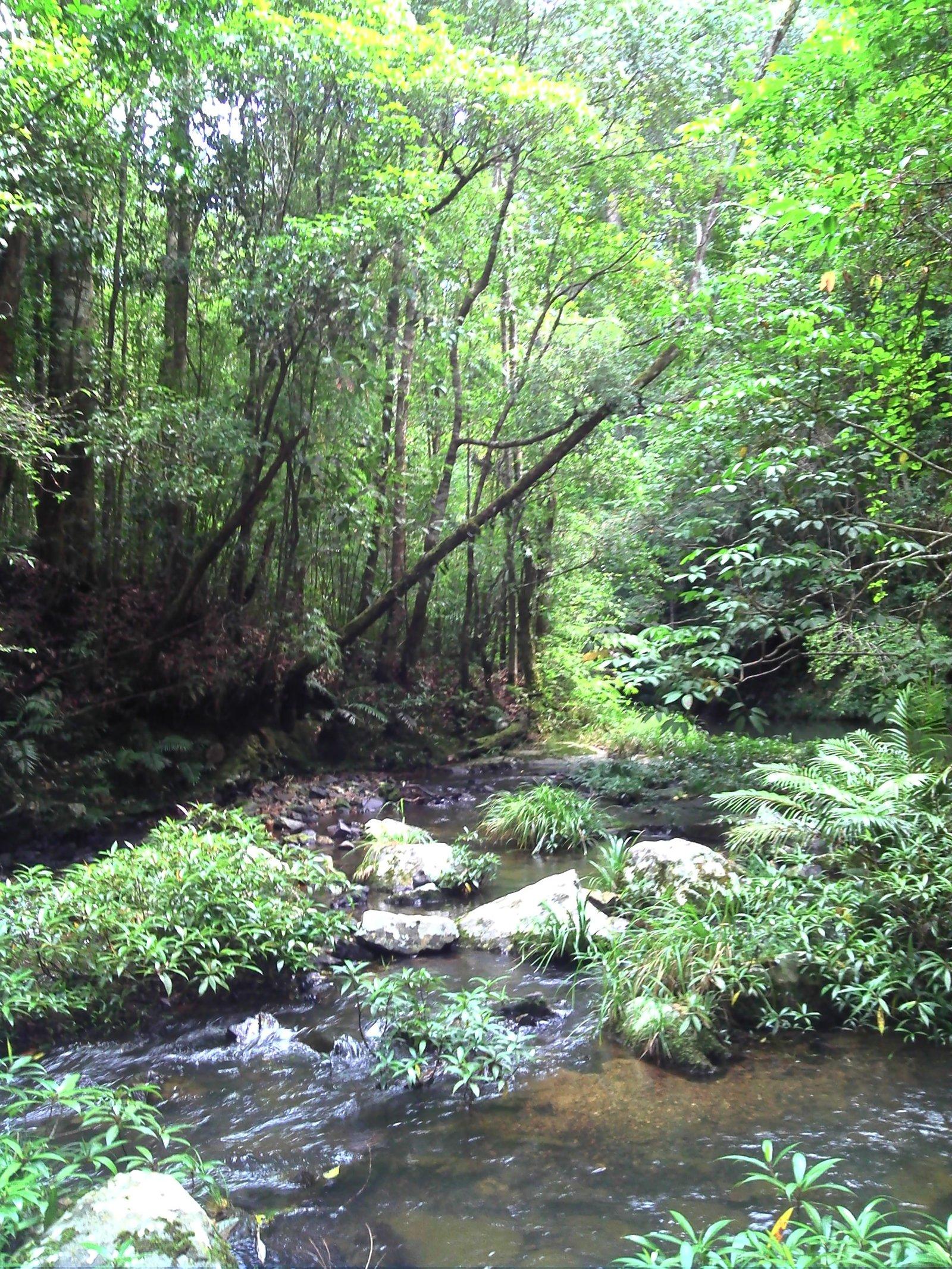 Undisturbed stream in Bidoup-Nui Ba National Park