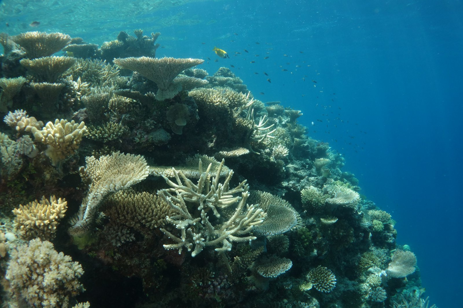 Underwater photograph of the reef at Lizard Island Research Station