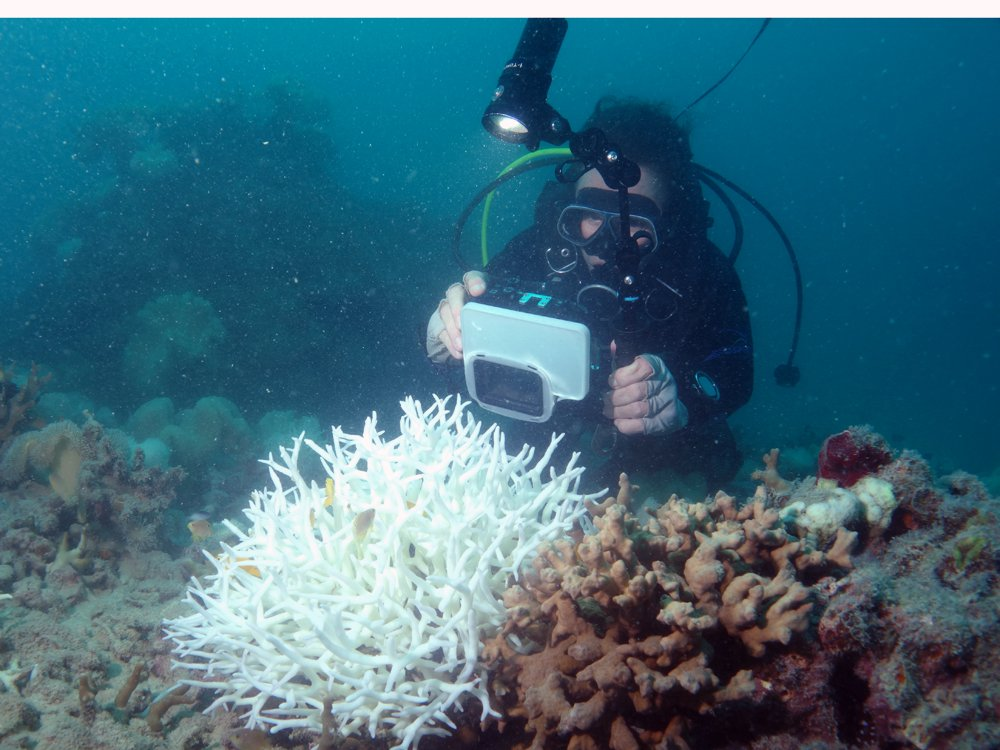 A researcher photographs bleached coral at Lizard Island