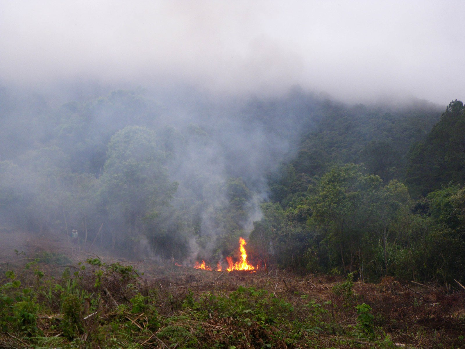 Forest loss in central Vietnam.
