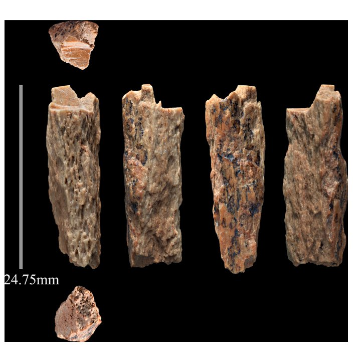 Denisova 11 leg bone fragment