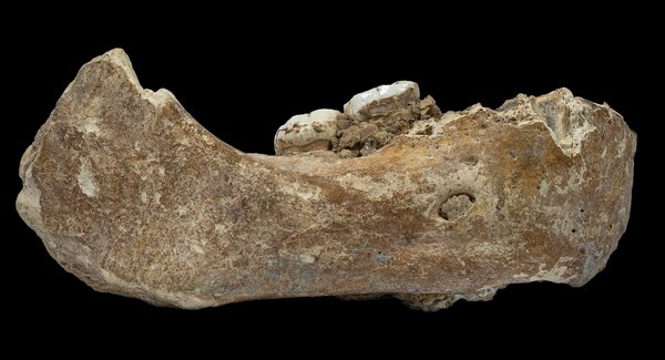 Xiahe lower jaw from Tibet