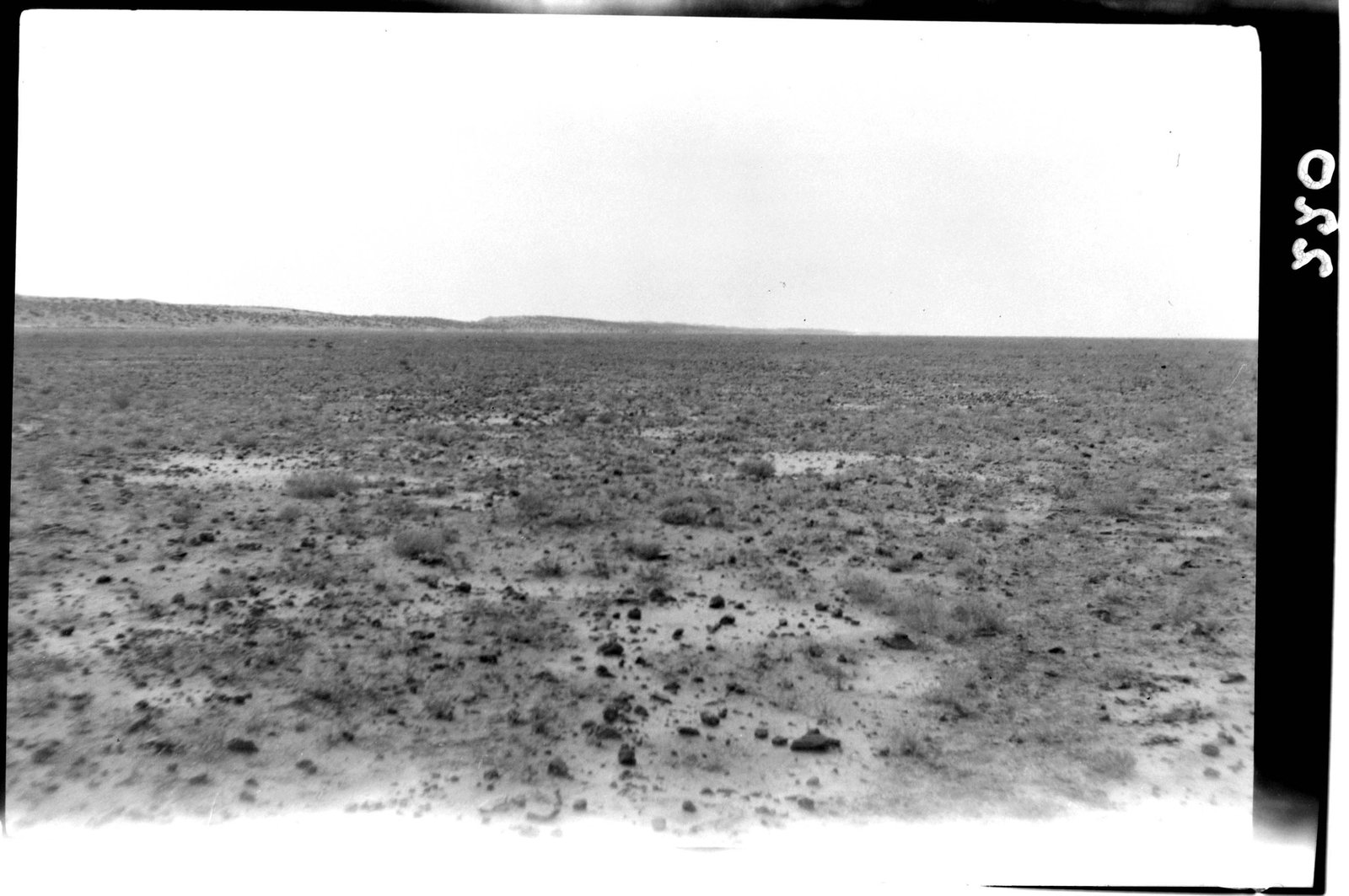 Desert Rat Kangaroo habitat circa 1931