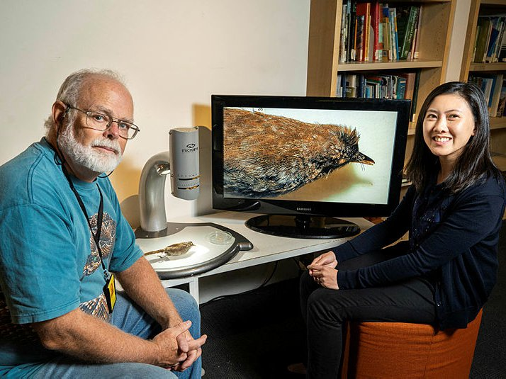 Dr Walter Boles and Dr Jacqueline Nguyen with an Eastern Bristlebird specimen
