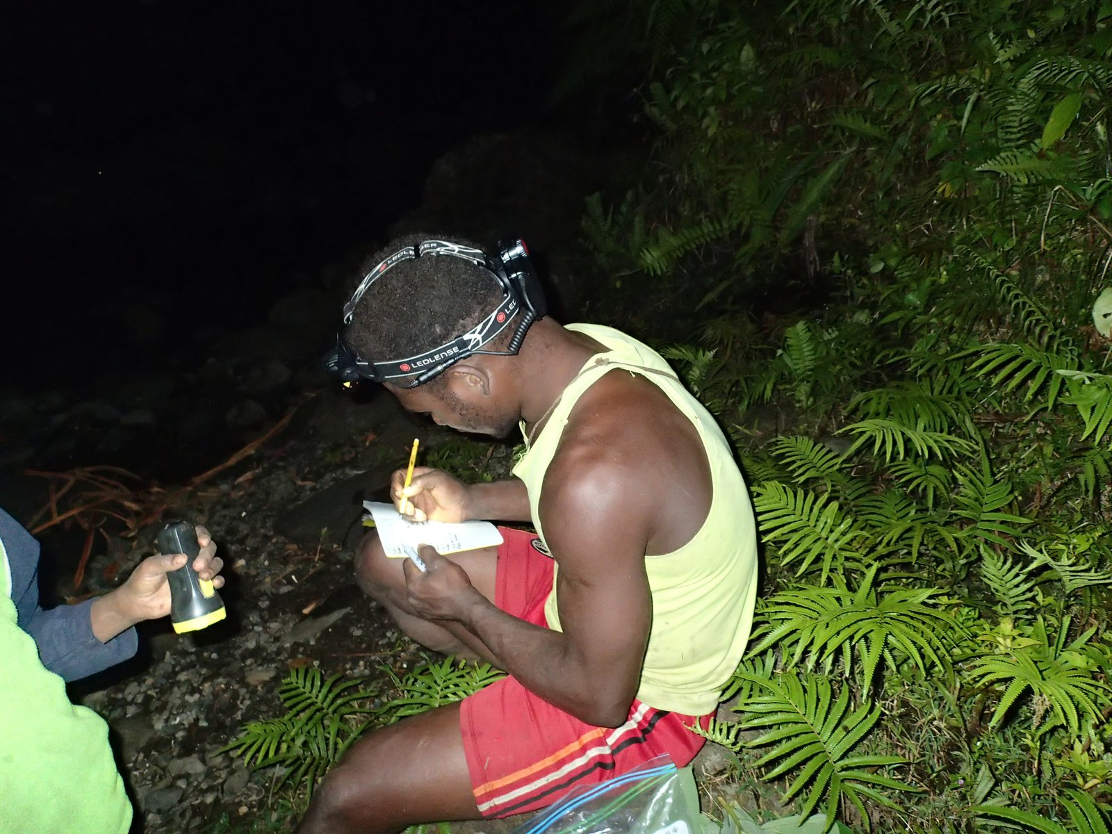 Expedition to Malaita Frog Survey