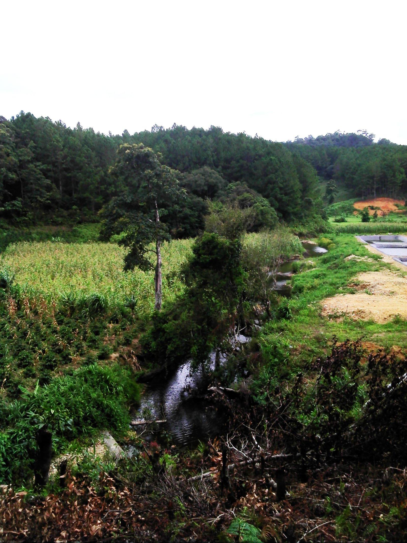 Stream in Bidoup-Nui Ba National Park, southern Vietnam.