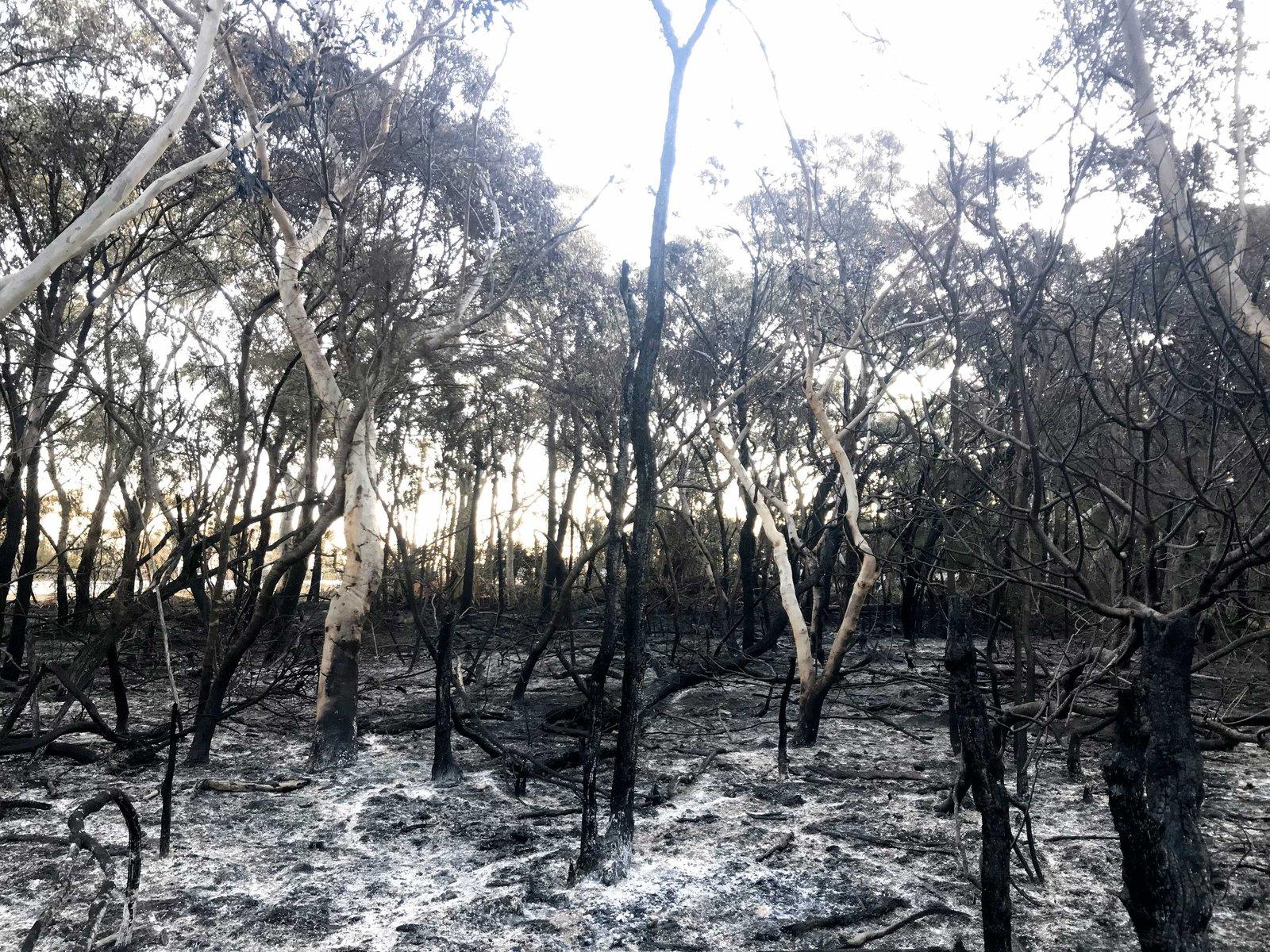 Burnt habitat