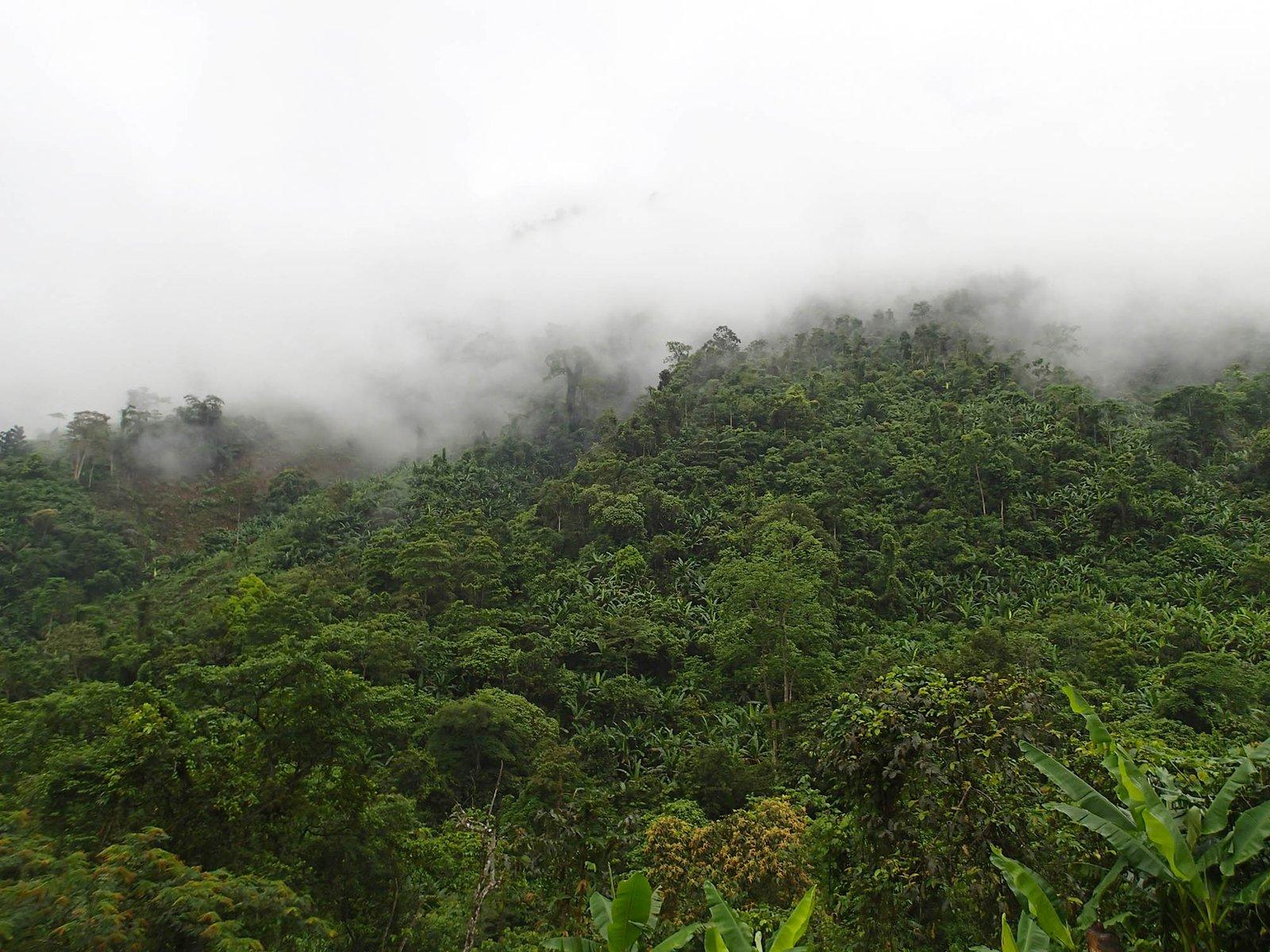 Forest in North Vietnam
