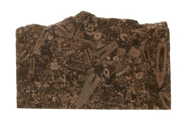 Fossiliferous limestone