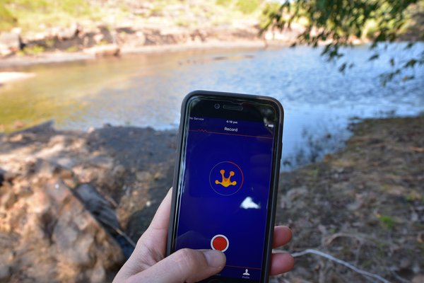 FrogID app in the Northern Territory