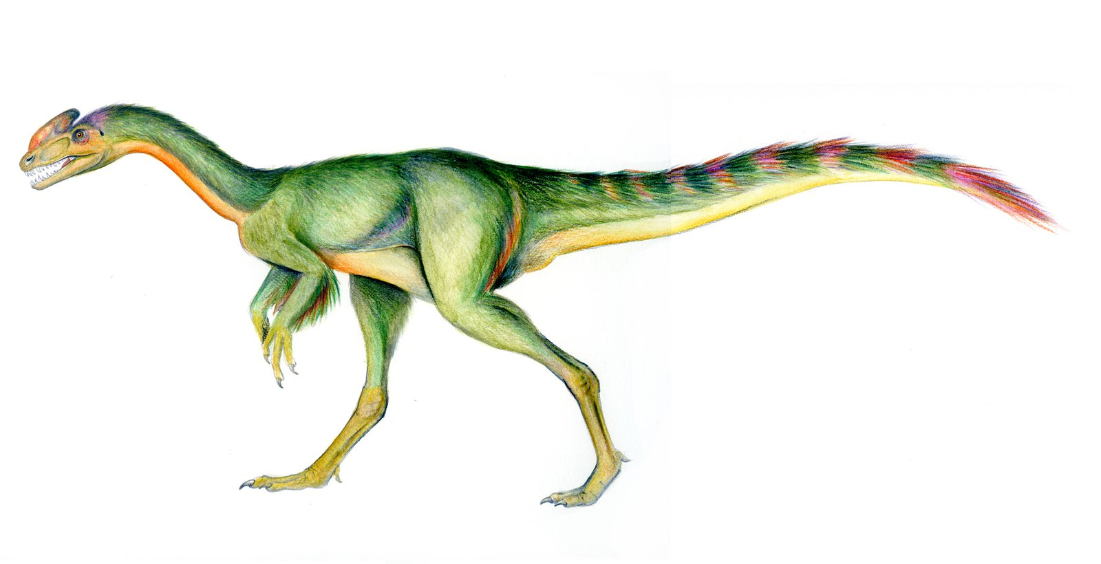 Guanlong colour model