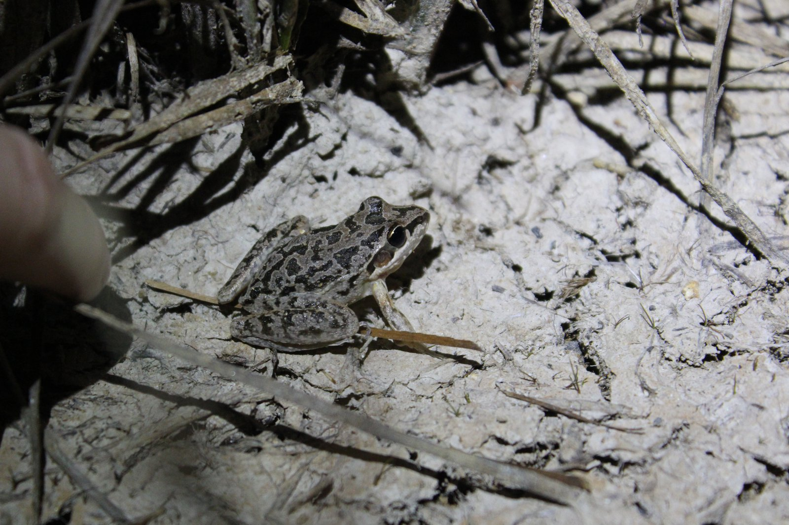 Hopping to it in the New England Tablelands - blog by Sophie Collins