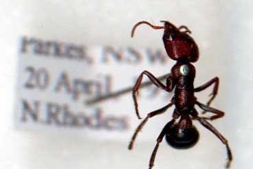 Insect bites and stings - The Australian Museum