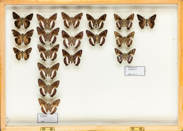 John Landy Butterflies Drawer 2 - 1