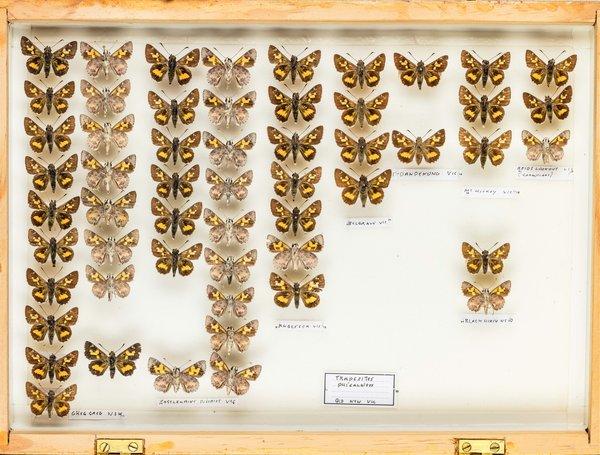 John Landy Butterflies Drawer 3 - 1