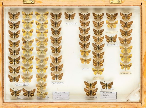 John Landy Butterflies Drawer 3 - 2