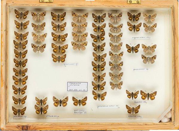 John Landy Butterflies Drawer 6 - 2