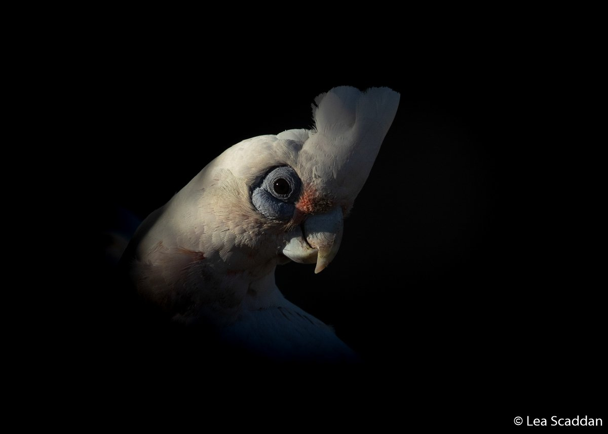 Animal portrait by Lea Scaddan