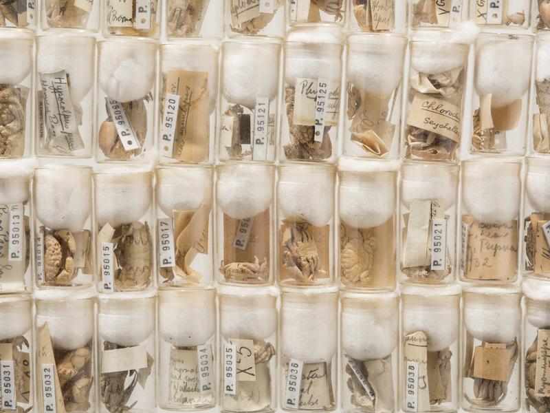 Mel Ward's Crab Collection