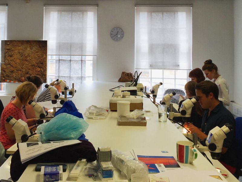 Polychate worm identification workshop in Bath, UK