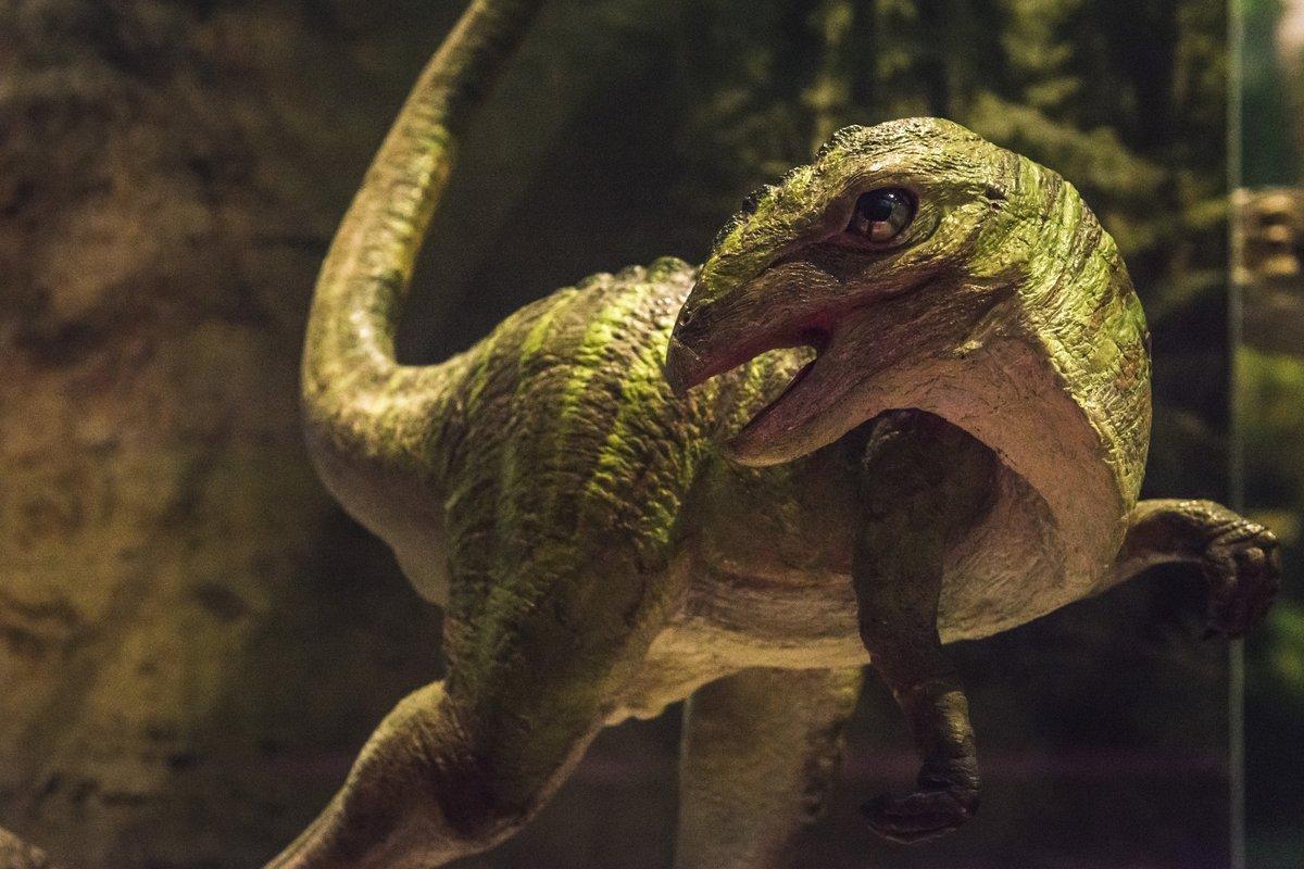 Qantassaurus Intrepidus The Australian Museum