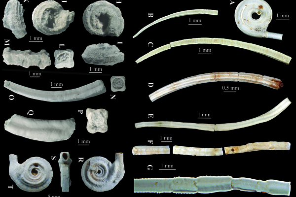 Recent vs Mesozoic deep-sea tubeworms
