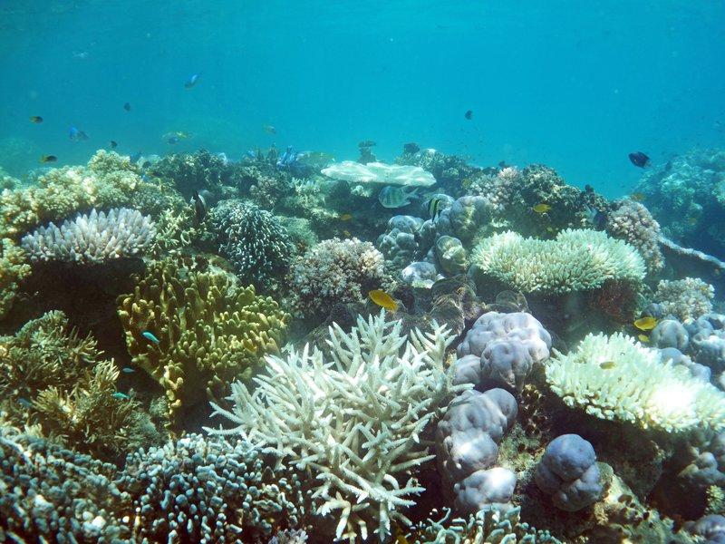 Reef flat in Lizard Island lagoon