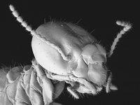 SEM of a termite worker